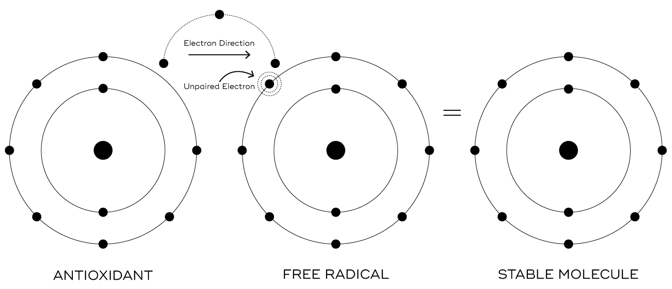 antioxidant and free radicals